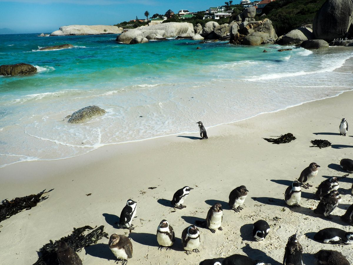 Nadia El Ferdaoussi the daily self Travel Blogger and Writer South Africa Cape Town African Penguins Simon's Town Boulders Beach