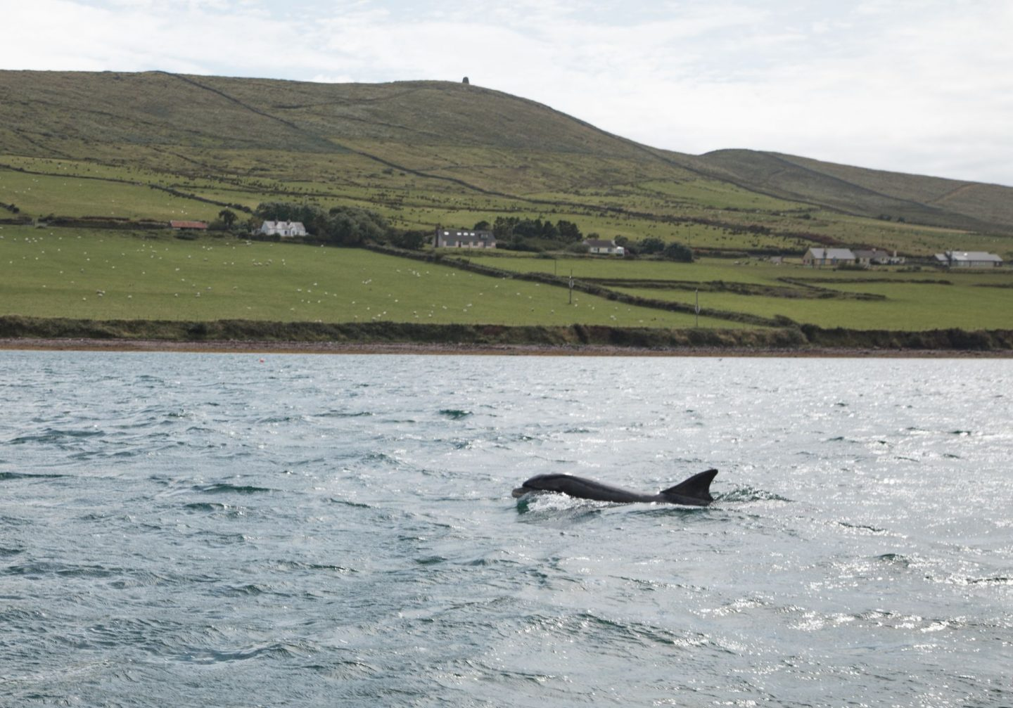 Fungie dolphin boat trip Dingle staycation Co Kerry