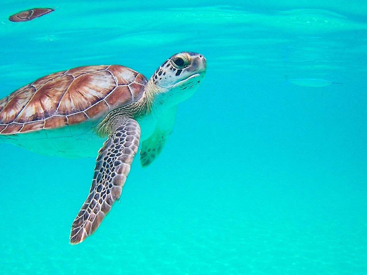Nadia El Ferdaoussi Irish Examiner Travel Barbados is always a good choice