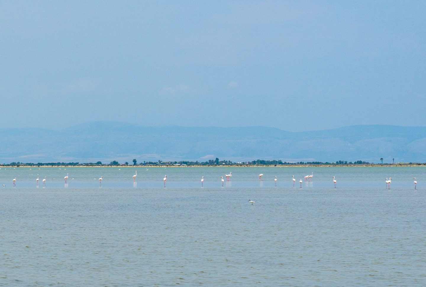 Margherita de Savoia Puglia Nadia El Ferdaoussi Travel Blogger and Writer Italy Salt pans lakes pink flamingoes