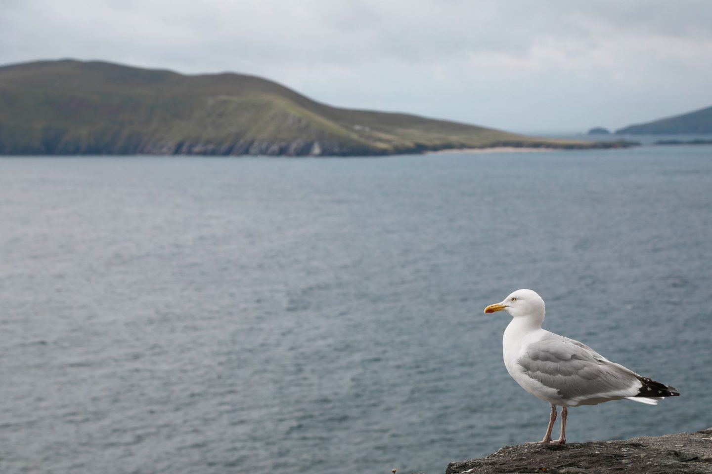 A Weekend in Dingle, Co. Kerry, Ireland. Wild Atlantic Way. Nadia El Ferdaoussi travel writer the daily s'elf Slea Head