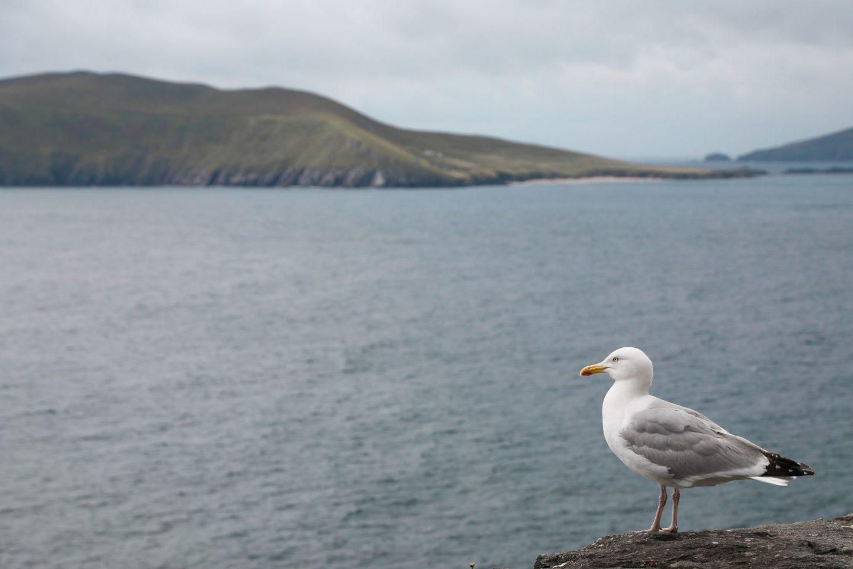 A Weekend in Dingle, Co. Kerry, Ireland. Wild Atlantic Way. Nadia El Ferdaoussi travel writer the daily s'elf Slea Head
