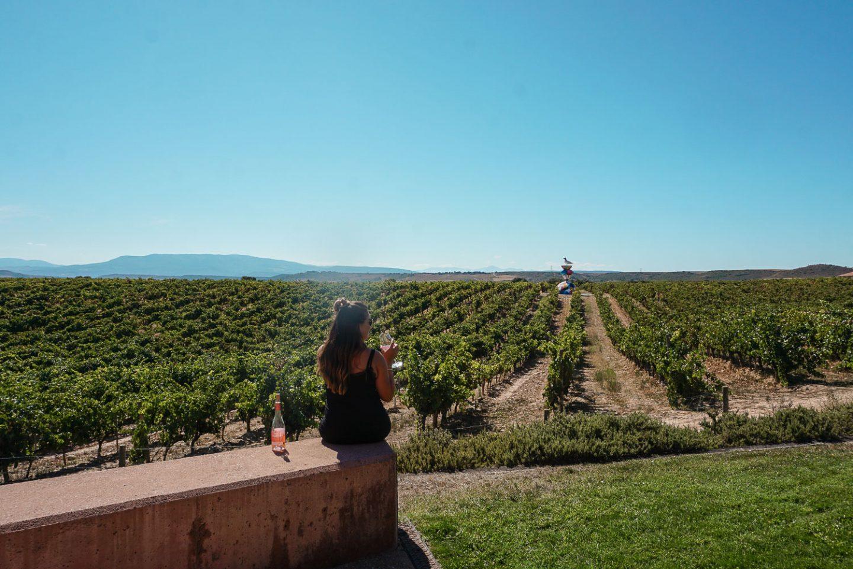 Rioja Wine Harvest Campo Viejo